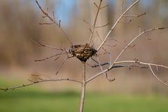 пустое гнездй Стоковые Изображения