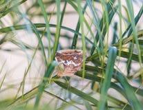 Пустое гнездо колибри в пальме Стоковые Изображения RF