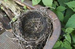 Пустое гнездо робинов Стоковые Изображения RF