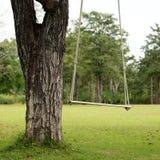 Пустое качание дерева Стоковые Фото