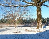 Пустое качание дерева Стоковое фото RF