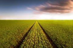 пустое поле Стоковое Изображение