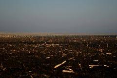 Пустое поле в тумане Стоковое Изображение