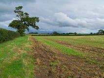 пустое поле Стоковые Изображения RF