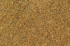 Пустое фото песка пляжа для предпосылки Тропический пляж с золотым песком Стоковые Фото
