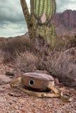 Пустой буфет в пустыне стоковое фото rf