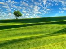 пустой вал поля Стоковая Фотография RF