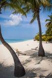 Пустой гамак между пальмами на тропическом пляже Стоковые Изображения RF
