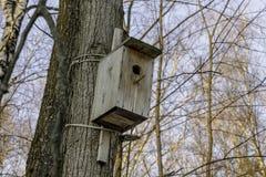 Пустой деревянный birdhouse в парке зимы Стоковые Изображения RF