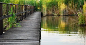 Пустой деревянный док Стоковое Изображение