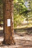 Пустой знак на дереве в лесе Стоковые Изображения RF