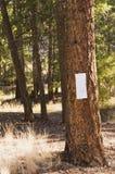 Пустой знак на дереве Стоковое Изображение