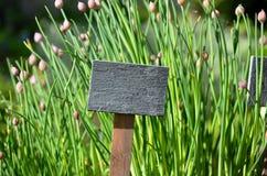 пустой знак цветков Стоковое Фото