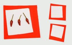 пустой красный цвет перца Стоковая Фотография