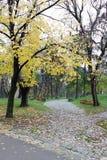Пустой парк осени Стоковые Фото