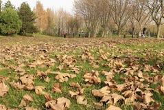 пустой парк Стоковая Фотография RF