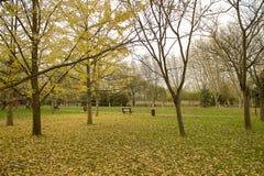 пустой парк Стоковые Фотографии RF