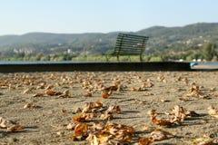 Пустой стенд на береге озера, упаденные листья осени на асфальте стоковая фотография rf