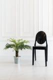 Пустой стул с заводом вазы Стоковое фото RF