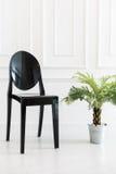 Пустой стул с заводом вазы Стоковые Изображения