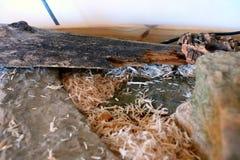 пустой vivarium Стоковые Фотографии RF