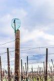 пустые бутылки на строках лоз Стоковое Фото