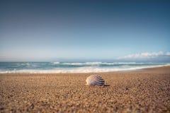 Пустые пляж и seashell песка стоковая фотография rf