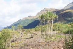 Пустые полесья должные к валке дерева lumberjack леса продавая древесину для возобновляющей энергии топлива и биомассы стоковое фото rf