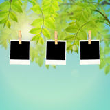 Пустые рамки фото против зеленых листьев Стоковые Изображения