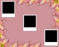 пустые фото лилии Стоковое Фото
