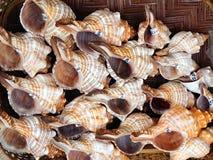 Пустые Seashells раковины, Греция Стоковые Фото