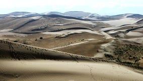 пустыни Стоковая Фотография