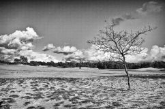 Пустыня ландшафта Hdr с деревом Стоковая Фотография