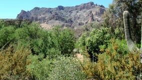 Пустыня Аризона Соноры видеоматериал