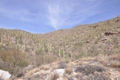 пустыня Аризоны стоковое фото
