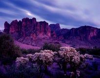 пустыня Аризоны Стоковые Фото