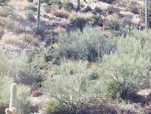 Пустыня Аризоны Стоковая Фотография