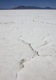 Пустыня Большого озера. Юта, США Стоковая Фотография RF