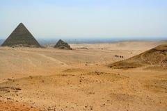 пустыня верблюдов Стоковая Фотография RF