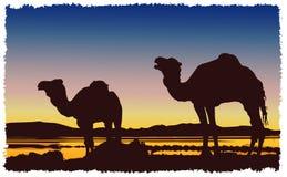 Пустыня верблюдов каравана Стоковые Фото