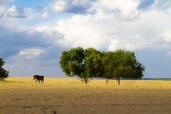 Пустыня в Иннер Монголиа Стоковые Фото