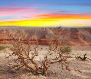 Пустыня Гоби Стоковая Фотография RF