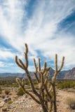 Пустыня горы Стоковое Изображение RF