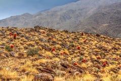 Пустыня имеет так много цвет Стоковое Изображение RF