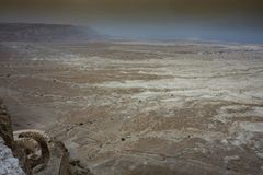 Пустыня Иудея и побережье мертвого моря E стоковые фотографии rf