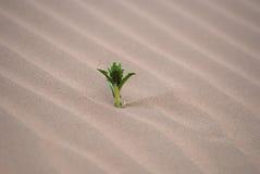 Пустыня и трава стоковое изображение