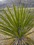 пустыня кактуса близкая вверх Стоковые Фото