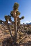 пустыня кактуса близкая вверх Стоковое фото RF