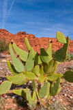 пустыня кактуса близкая вверх Стоковые Изображения