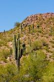 пустыня кактуса другие заводы стоковое фото rf
